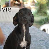 Silvye  taglia piccola chiede una casa per la vita