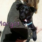 margot LABRADOR IN MINIATURA