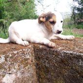 Violetta, cuccioletta medio piccola