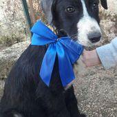Oliva, dolcissima cucciola, cerca casa!