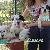 Zenzero, Glenn, Rhum e Mojito