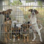Adozione cuccioli di cane di piccola taglia