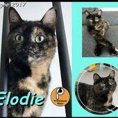 (Torino) Adozione gattina Elodie, Protezione Micio Onlus europeo comune , Gatto Femmina
