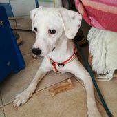(Brindisi) Macchia cerca casa canina , Cane Femmina