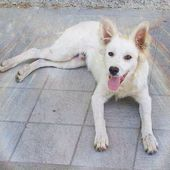 (Cosenza) Cucciolo sordo meticcio , Cane Maschio