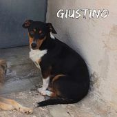 Giustino il jack russell timido