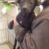 Cani in adozione taglia piccola catania