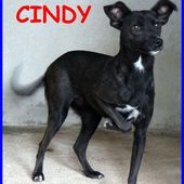 CINDY, TENERA SIMIL PINSCHERINA 2 ANNI, IN CANILE