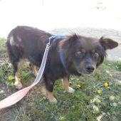 Buddy, mix volpinetto dolcissimo