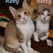 Gattini Betty e Roby, 9 mesi