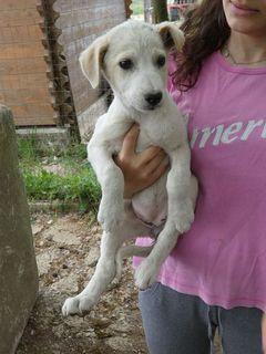 Adozione ASTRA, dolcissima cucciola in adozione Cane mix labrador Femmina
