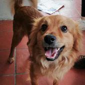 Adozioni Di Cani E Gatti Calabria Pagina 1