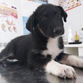 TUG - cucciolo di 3 mesi - taglia media